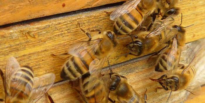 Evitare che le api facciano nidi
