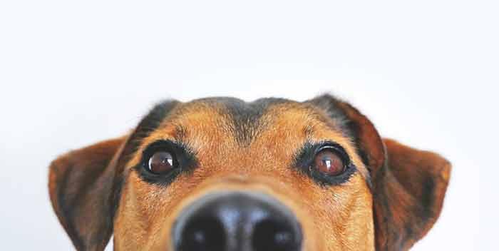 Toelettatura e pulizia di un cane