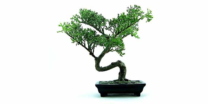 Innaffiare un bonsai