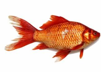 Togliere la spina di pesce
